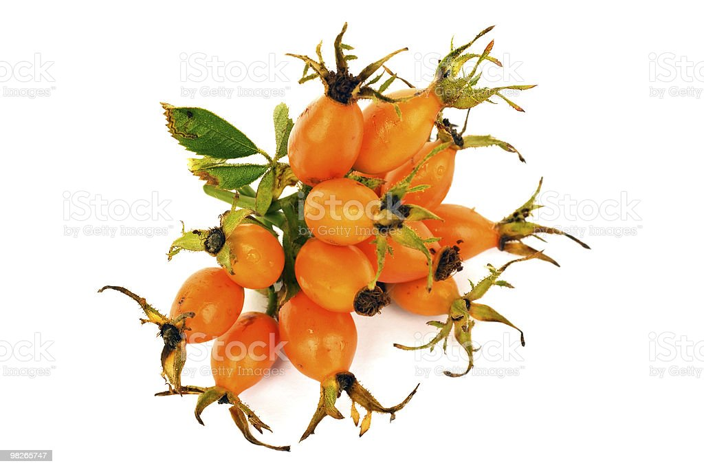 Bunch of oval orange rose hip royalty-free stock photo