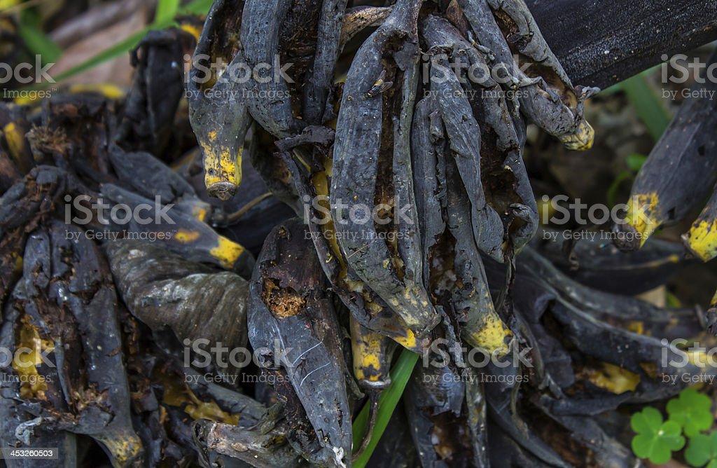 bunch of overripe, rotten bananas royalty-free stock photo