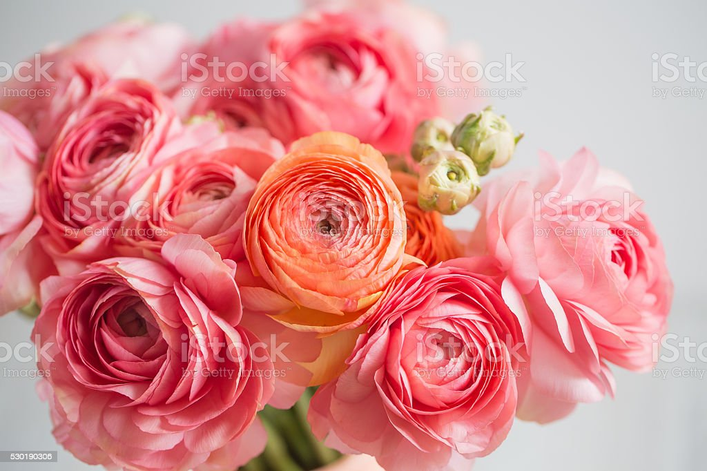 bunch of pale pink ranunculus persian buttercup  light background, wooden bunch of pale pink ranunculus persian buttercup light background, wooden surface. glass vase.  spring, summer Backgrounds Stock Photo