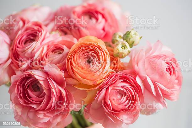 Bunch Of Pale Pink Ranunculus Persian Buttercup Light Background Wooden Stock Photo - Download Image Now