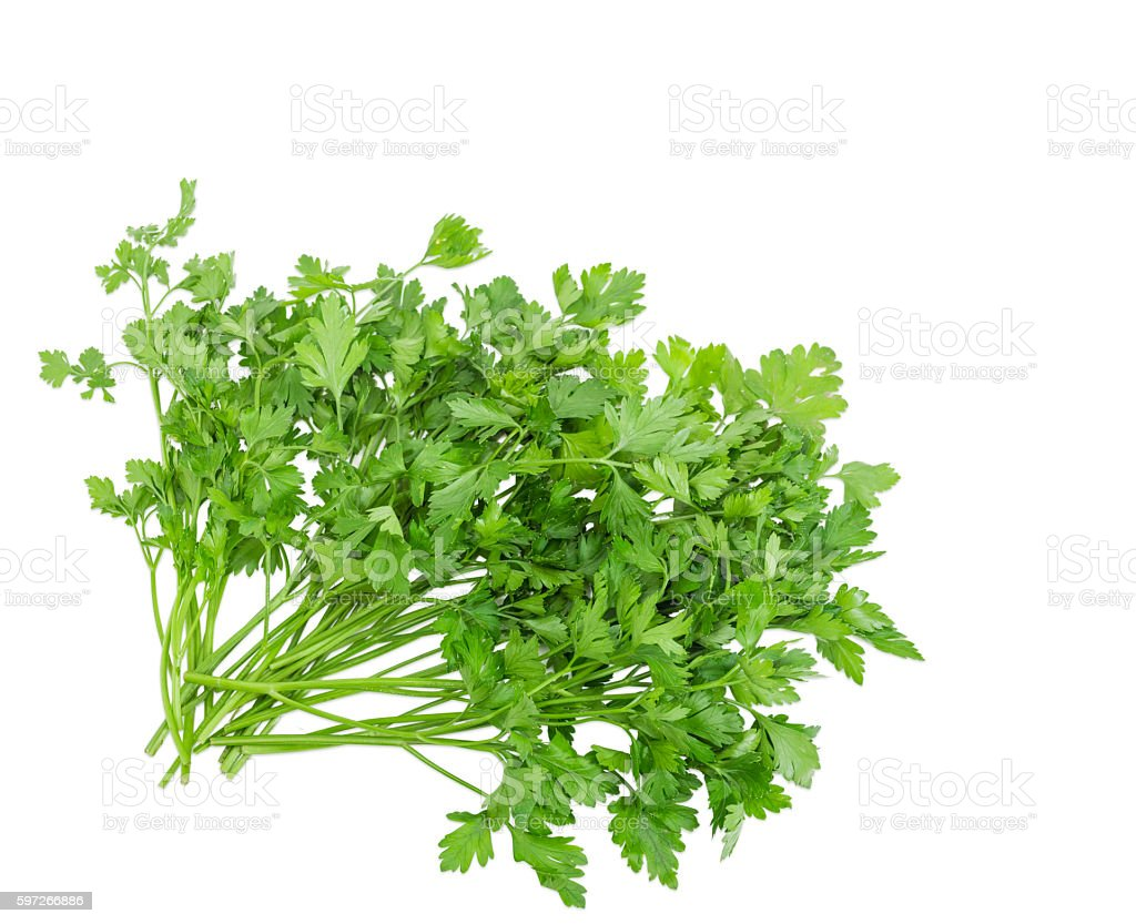 Bunch of parsley on a light background Lizenzfreies stock-foto