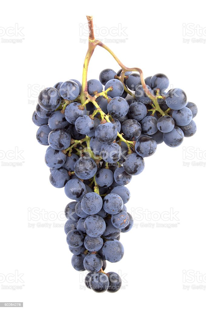 Bunch of Pinot noir grapes on a white background royalty-free stock photo