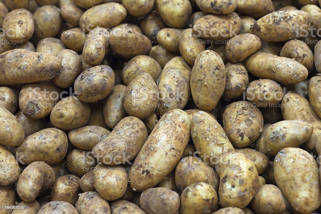 Bunch of potatoes fresh from the land stock photo