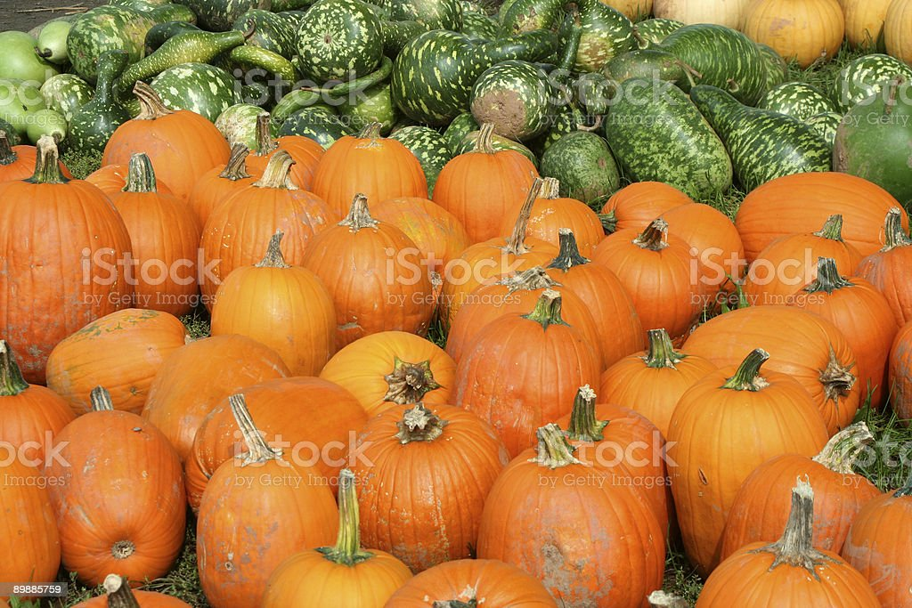 Bunch of pumpkins and gourds royalty-free stock photo
