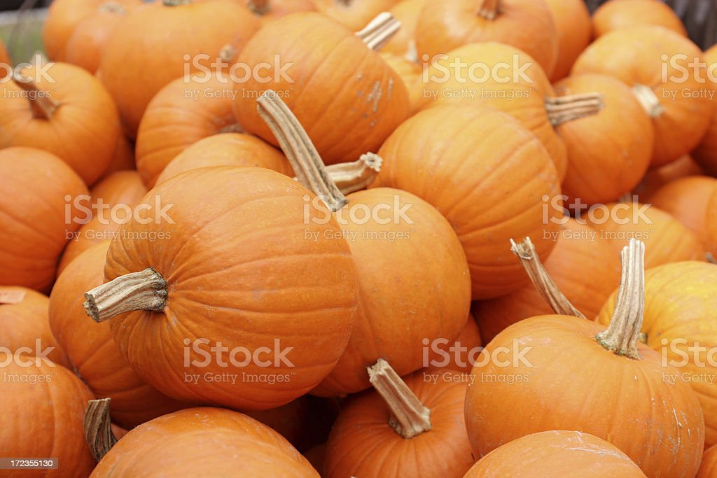 bunch of pumpkins royalty-free stock photo