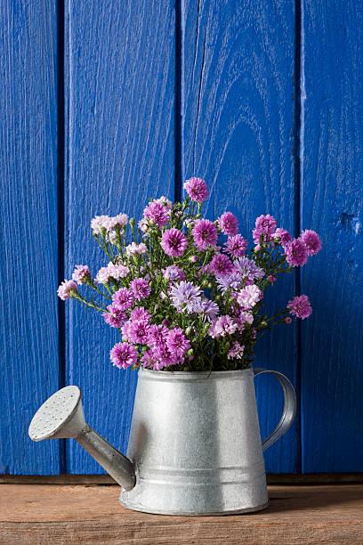 Bündel von lila Blumen in einer Gießkanne – Foto