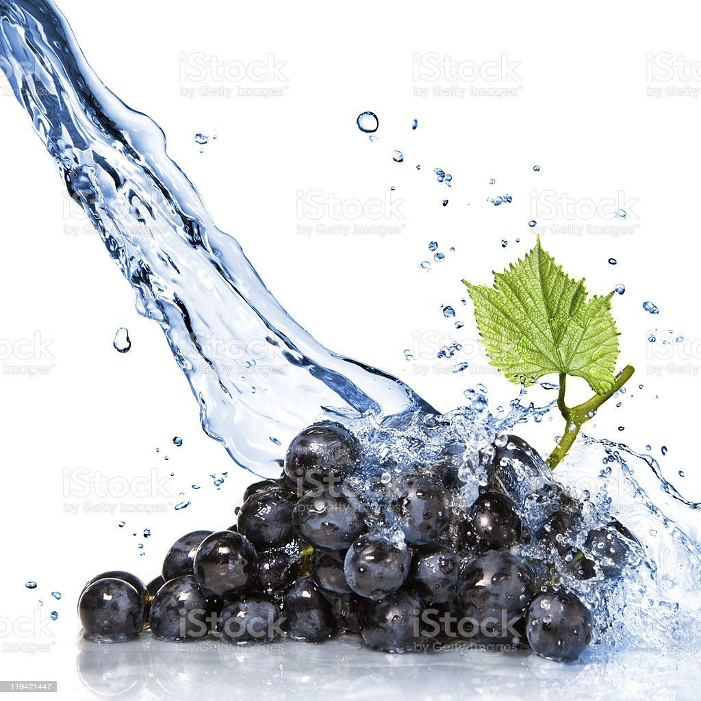 Bunch of purple grapes splashed with water stock photo