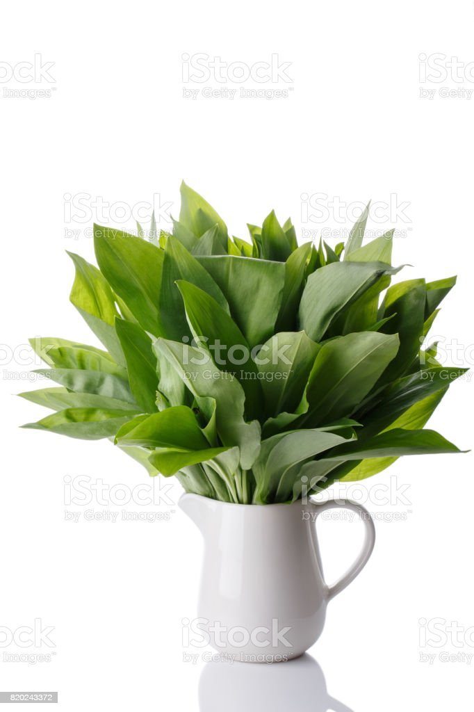 Bunch of ramson leaves. Wild garlic isolated on white. stock photo