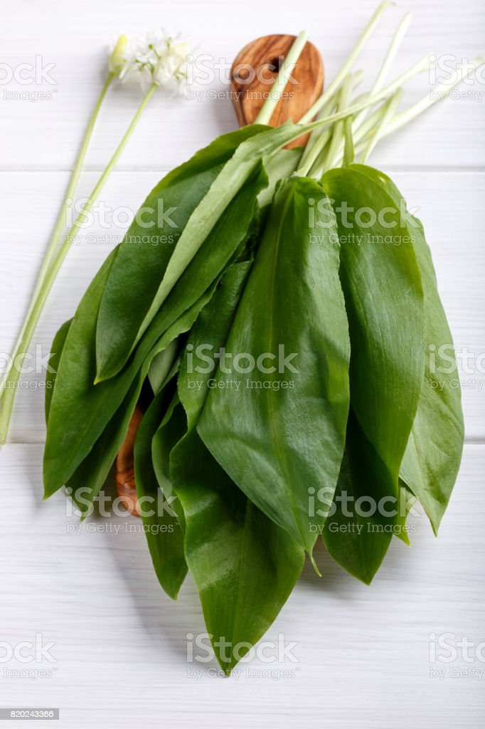 Bunch of ramson leaves. Wild garlic on white wooden table. stock photo