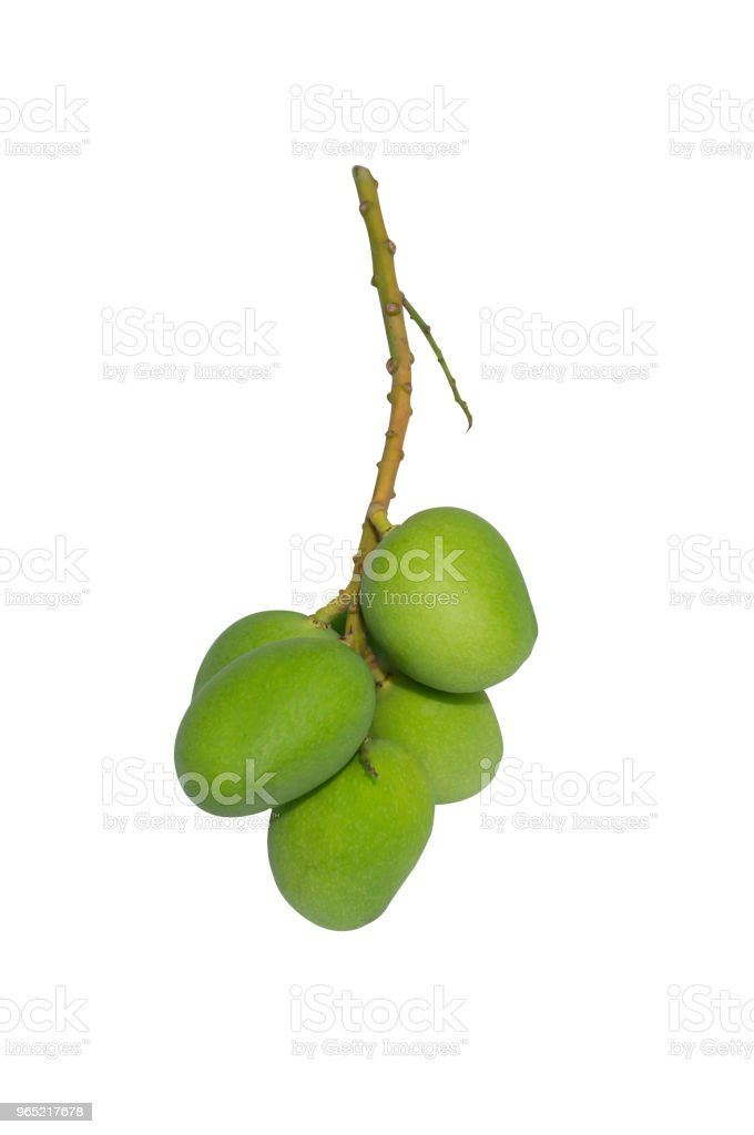 A bunch of raw small mangoes on white background with clipping path zbiór zdjęć royalty-free
