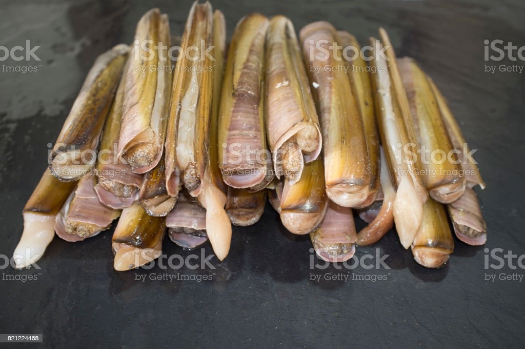 Bunch of razor clams in their shell stock photo
