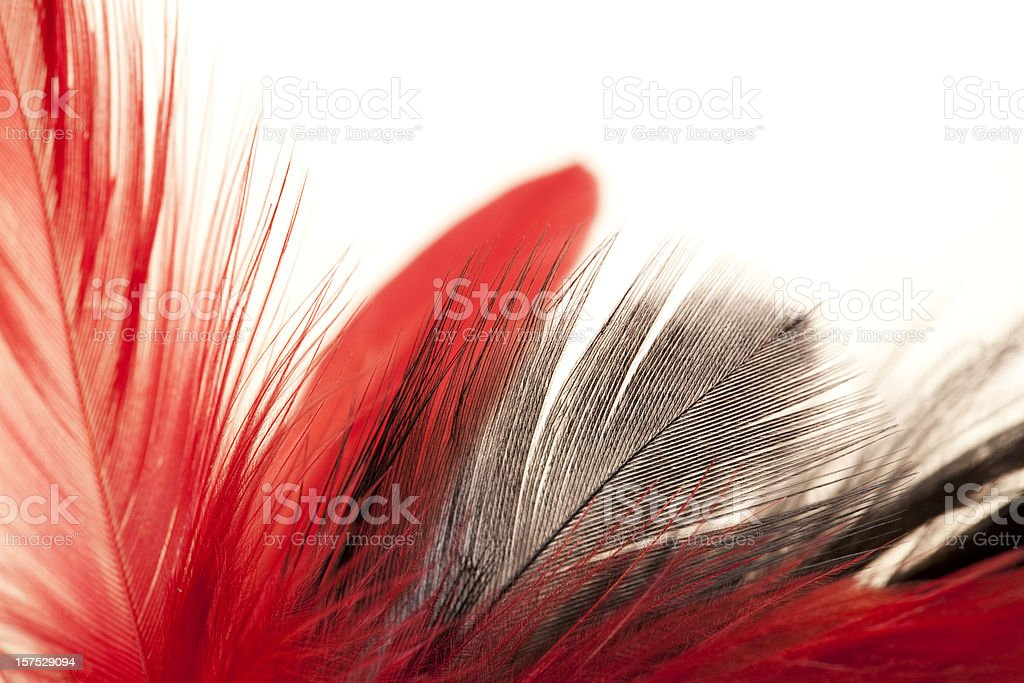 A bunch of red and grey feathers stock photo