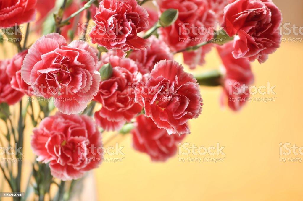 Ramo de flores rojas y rosas en un florero. Fondo pastel. - foto de stock