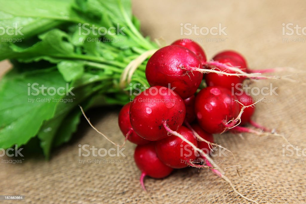 A bunch of red radishes on brown wool stock photo