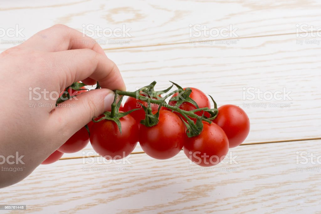 Bunch of red ripe  cherry tomatos in hand - Royalty-free Agriculture Stock Photo