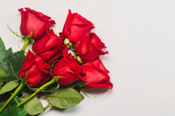 strauß roter rosen auf weißem hintergrund - rose stock-fotos und bilder