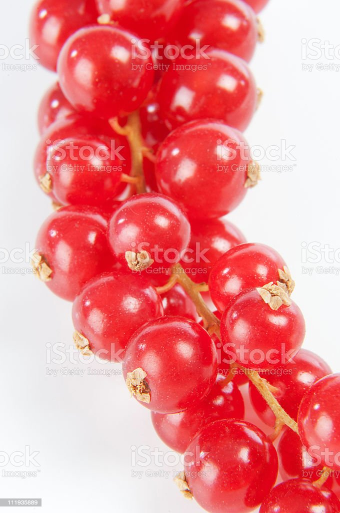 Bunch of Ribes on a white background royalty-free stock photo
