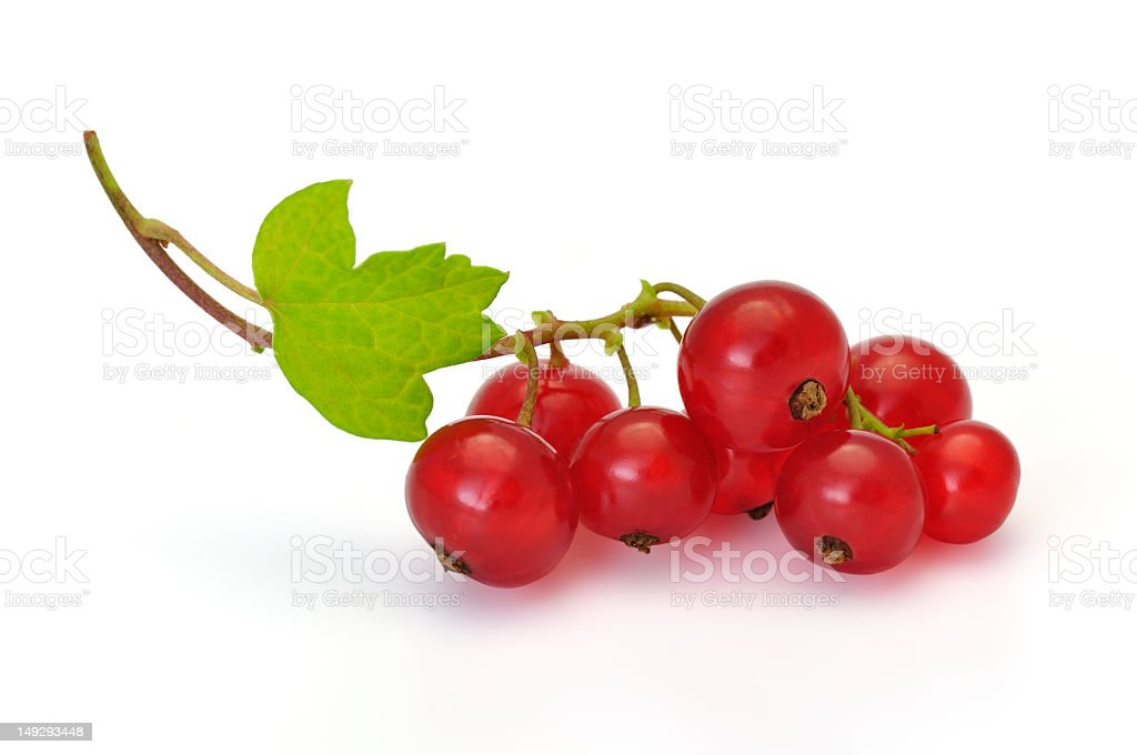 Bunch of ripe red currants on their stalk with a green leaf stock photo