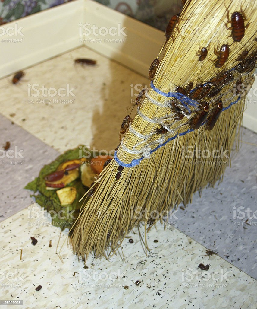 A bunch of roaches on a broom sweeping up garbage royalty-free stock photo