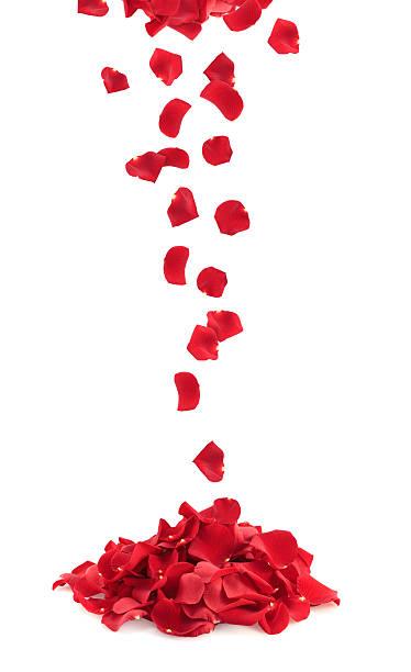 Bunch of rose petals picture id182374359?b=1&k=6&m=182374359&s=612x612&w=0&h=efs1ovymwmtn81j29axu el8knutgqdkgtxbozwxw0y=