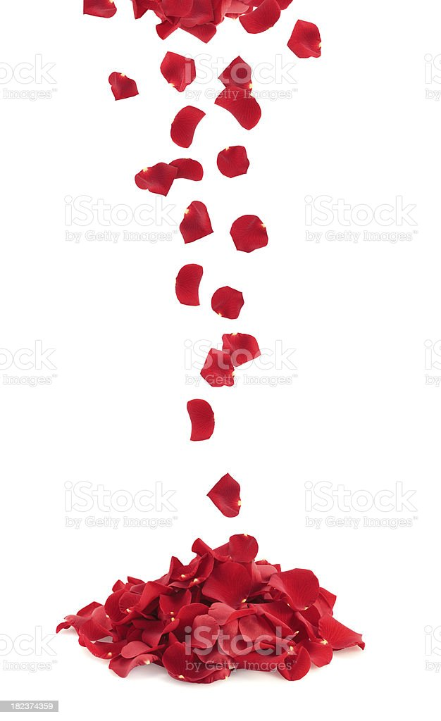 Bunch Of Rose Petals stock photo
