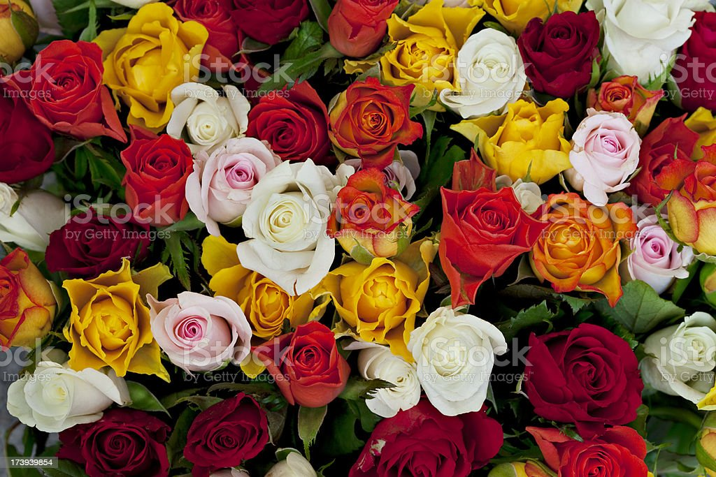 Bunch of roses in bundle of many colors stock photo