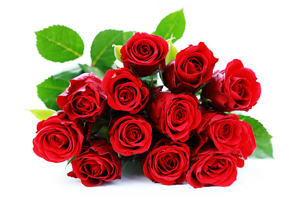 Bunch of roses picture id155226261?b=1&k=6&m=155226261&s=612x612&w=0&h=u4wp2powdxaf3l8yk pt1w5g0gqm07gsn9br0diz hm=