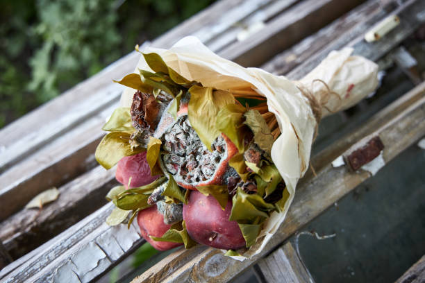 Bunch of rotten fruit and wilted flowers lay on old wooden boards Bunch of rotten fruit and wilted flowers lay on old wooden boards disavow stock pictures, royalty-free photos & images