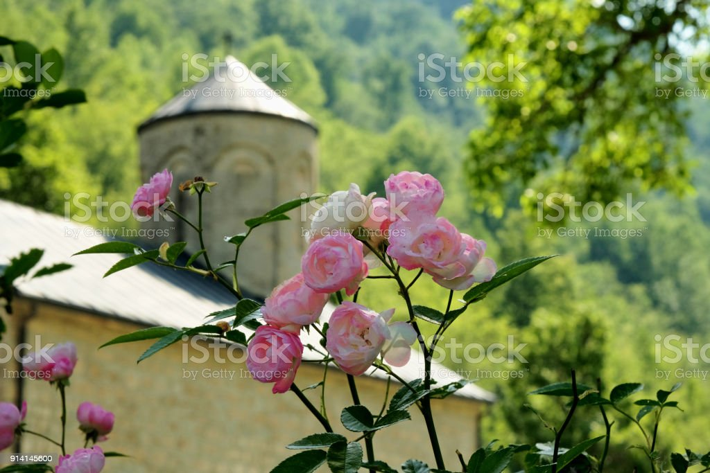 bunch of small roses stock photo