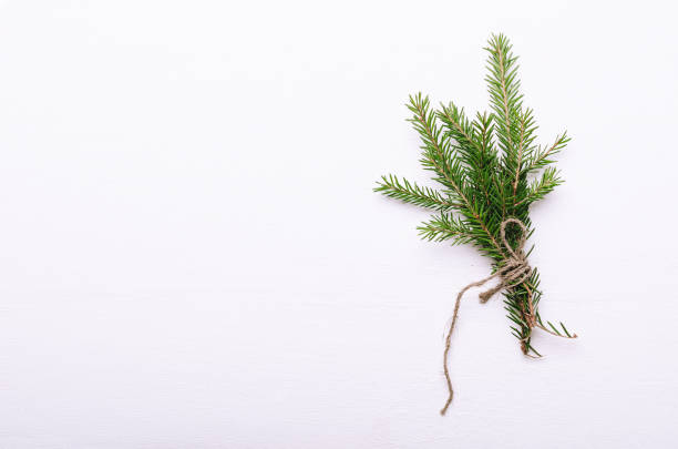 A bunch of small thorny evergreen fir branches wrapped in rope on white background. Winter bouquet, New Year's mood. Copy space, top view A bunch of small thorny evergreen fir branches wrapped in rope on a white background. Winter bouquet, New Year's mood. Copy space, top view twig stock pictures, royalty-free photos & images