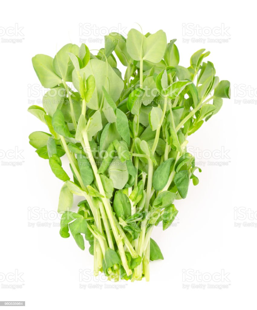 Bunch of snow pea microgreen from above stock photo