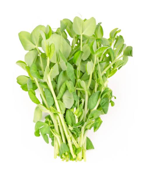 massa sockerärtor microgreen från ovan - pea sprouts bildbanksfoton och bilder