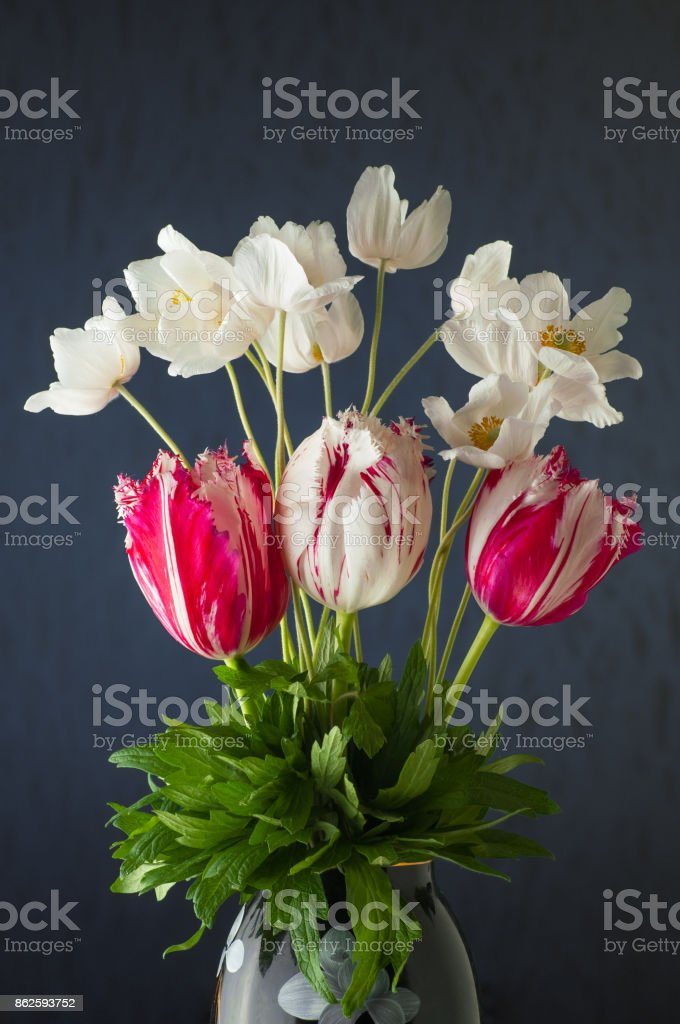 Bunch of spring tulip flower and white anemones flowers on violet background stock photo
