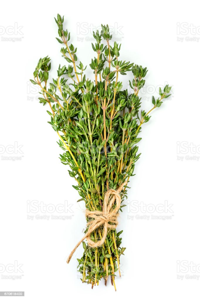 Bunch of Thyme Isolated on White stock photo