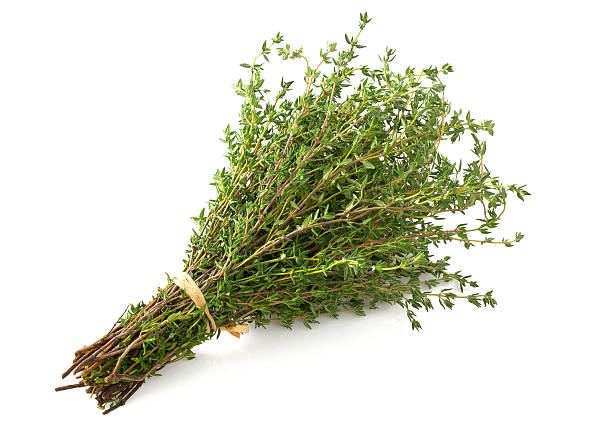 bunch of thyme bunch of thyme thyme photos stock pictures, royalty-free photos & images