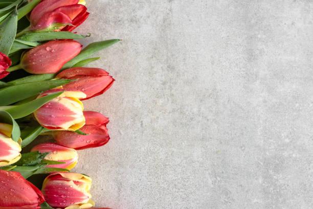 Bunch of tulip bouquet of flowers for mothers day card spring tulips picture id1130633766?b=1&k=6&m=1130633766&s=612x612&w=0&h=xgjtmcrkxmruizl5zcb9v z25jrcvzirjzlyoehqi u=