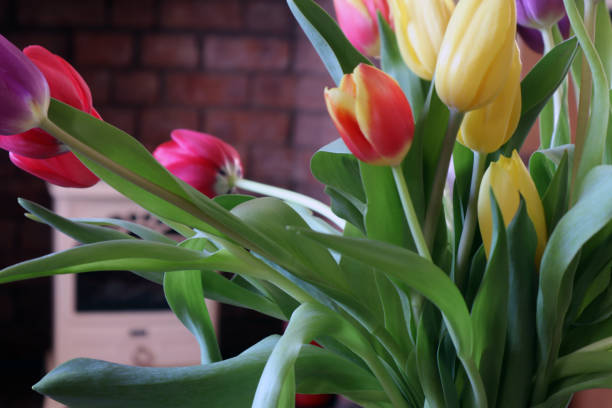 A bunch of tulips stock photo