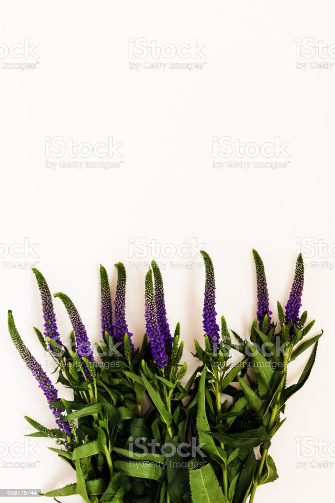 Bunch Of Veronica Flowers Isolated On White Background Stock Photo