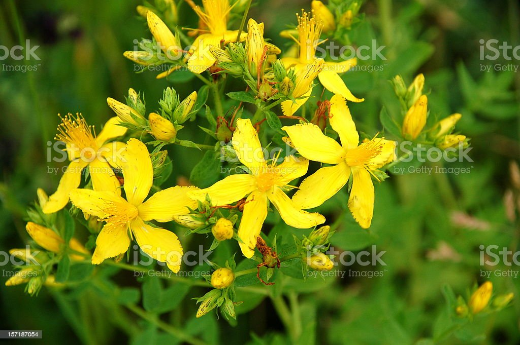 Bunch of vibrant yellow flowers stock photo