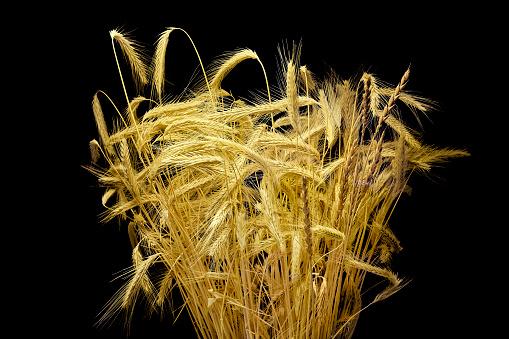 Bunch of wheat ears.