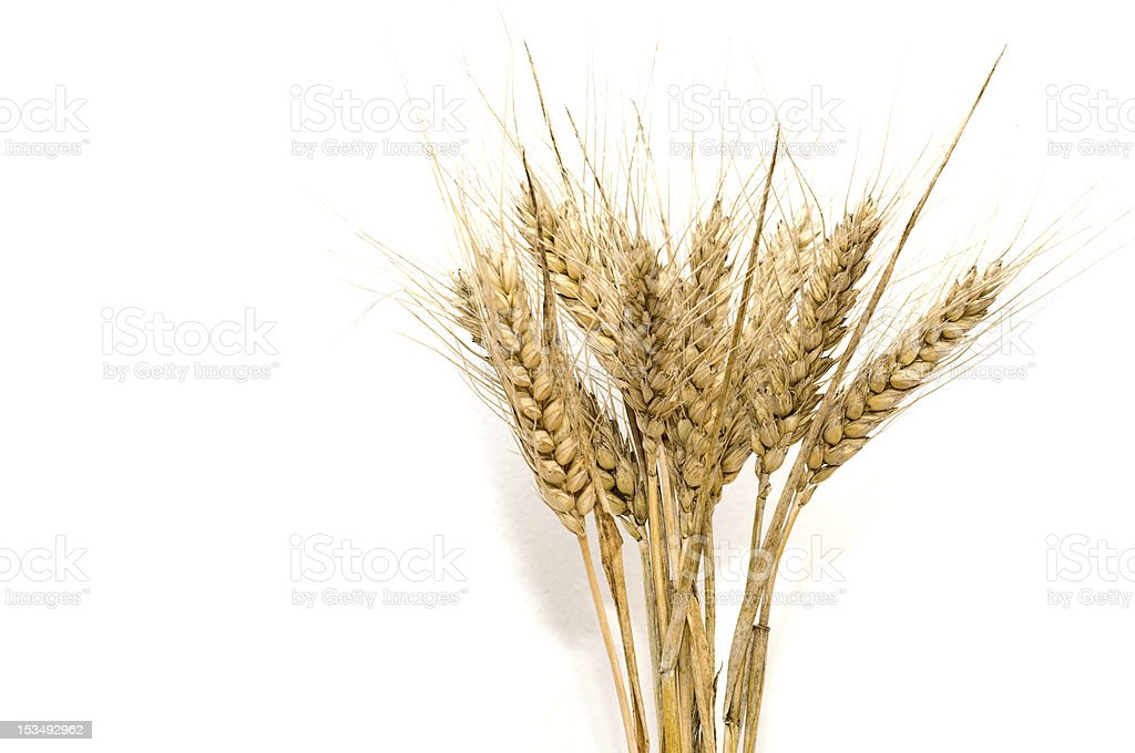Bunch of wheat spikes stock photo