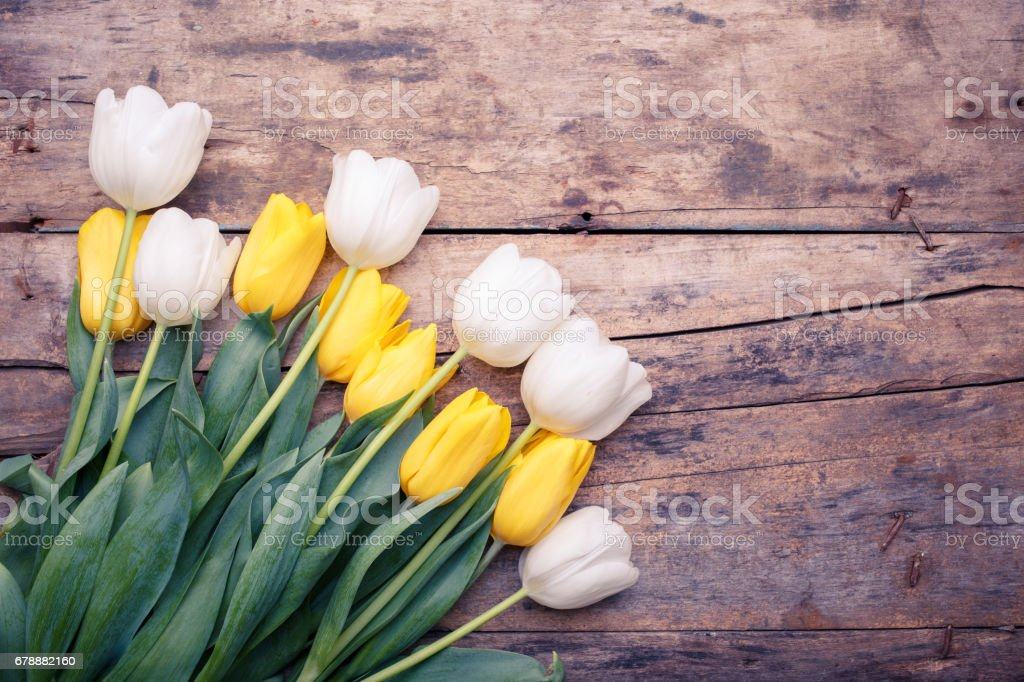 Bunch of white and yellow tulips on wooden table royalty-free stock photo