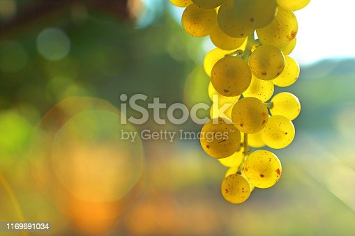 istock Bunch of white grape seeds light 1169691034