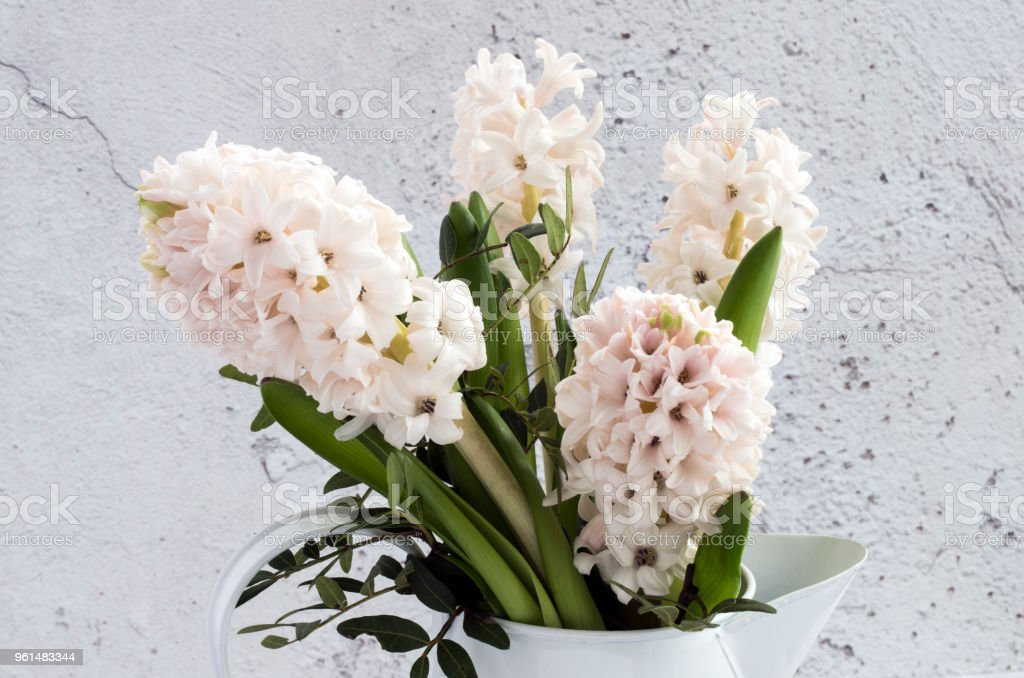 Bunch of White Hyacinths in a vase stock photo
