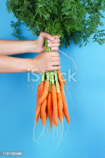 Woman hands holding bunch of whole fresh raw carrots on light blue background.