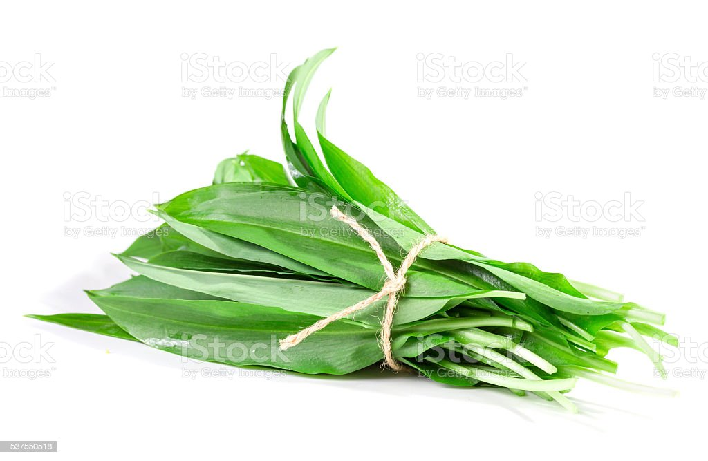 bunch of wild garlic leaves stock photo