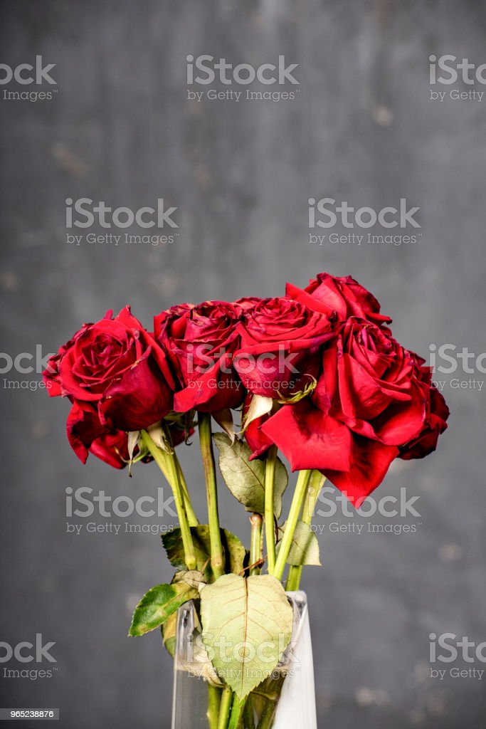 Bunch of wilting red roses in vase. royalty-free stock photo