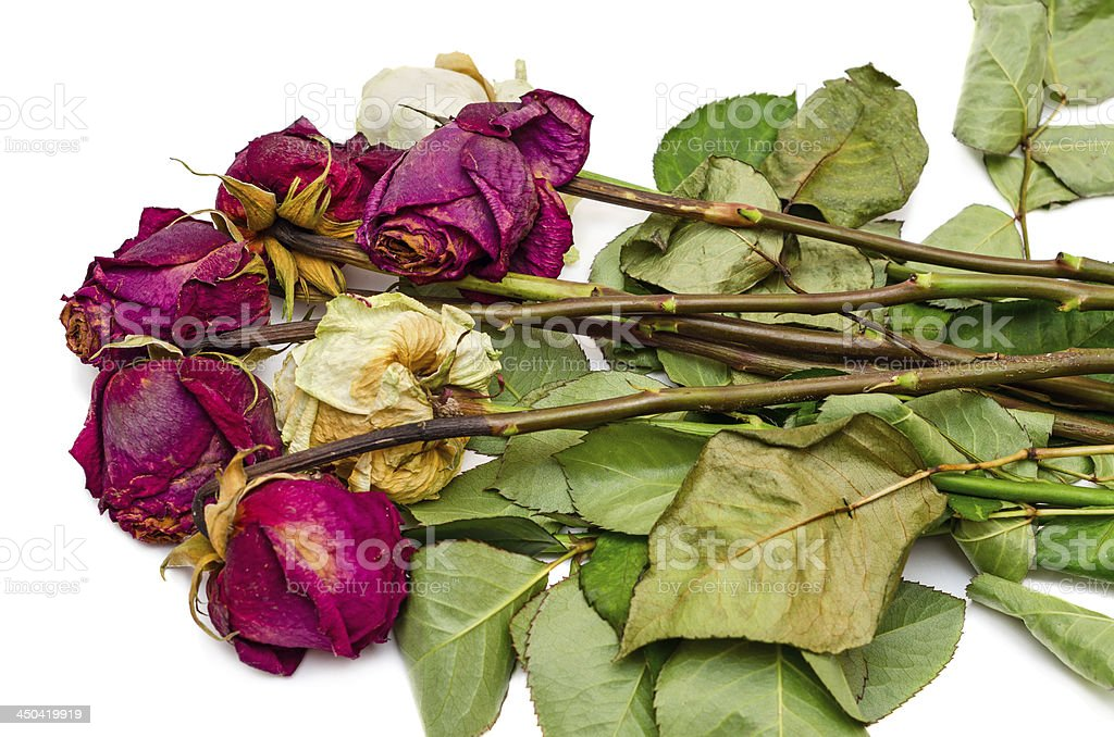 Bunch of withered roses royalty-free stock photo