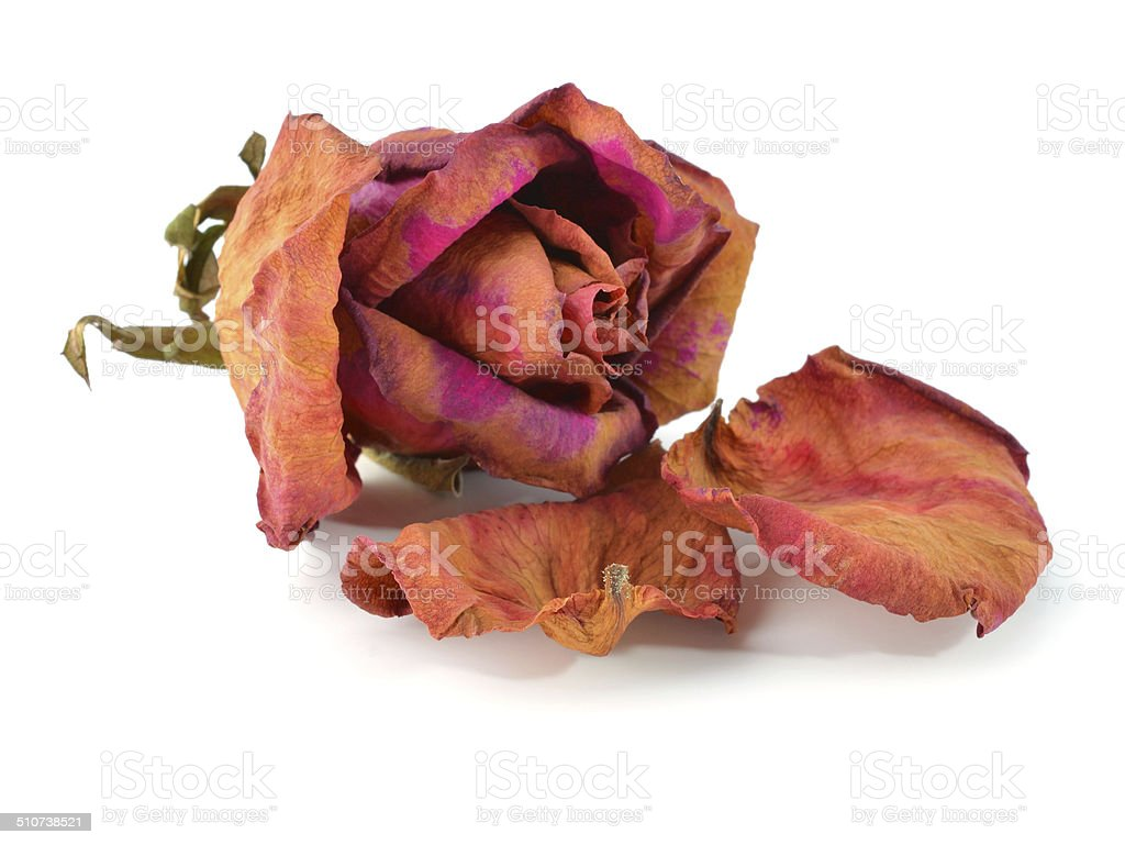 Bunch of withered roses stock photo