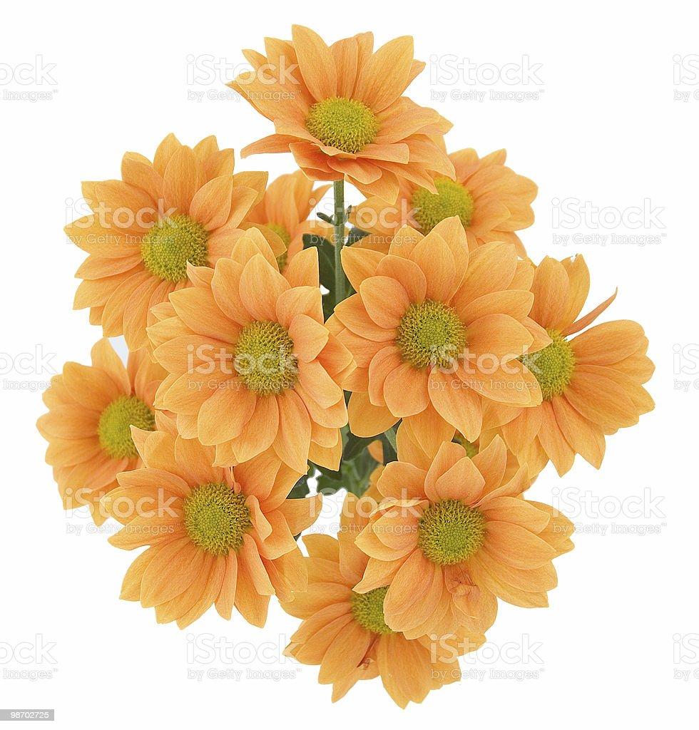 bunch of yellow chrysanthemums royalty-free stock photo